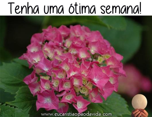 flor_rosa